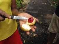 De La Grenade: Die Muskatnus