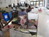 Fischmarkt:Tunfisch frisch vom Fang