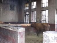 Fleischmarkt: Das Rohprodukt