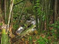 Der Weg zum Bad führt quer durch den tropischen Regenwald