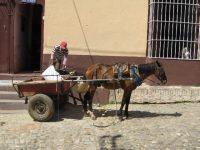 Pferdefuhrwerk als Lastentransport