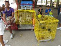 Hundeverkauf
