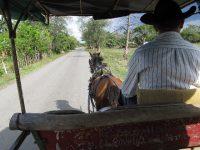 Pferdefuhrwerk als tägliches Transportmittel