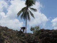 Kokosnuß knacken wie in der Steinzeit