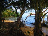 Zwischen Strand und Mangroven