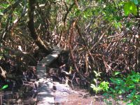Mangrovenpfade