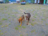 Coco und-Choclate Wachhunde und Kuscheltiere