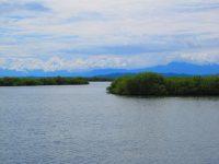 Labyrinth aus Mangroveninseln