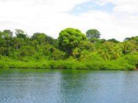 Nur Dschungel und Urwaldgeräusche um uns herum