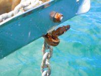 Wir spülen die Schlange nit Eimern von Salzwasser von Bord