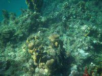 Rifffische und Korallen