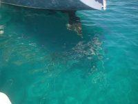 Türkiesblaues Wasser unter Gegenwind