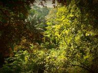 Spaziergang: Dschungel direkt hinter der Shelter Bay Marina