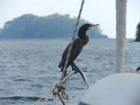 Besucher an Bord